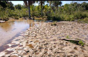 PMA autua proprietário rural por degradação de leito e matas ciliares de córrego